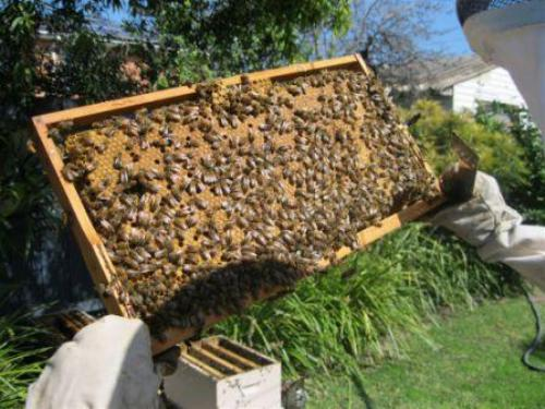 Brood frame sunshine hive