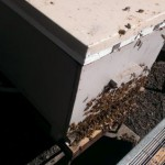 bees on front of box